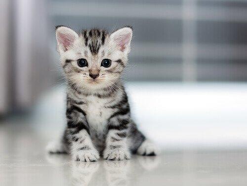 Gatinhos bonitinhos