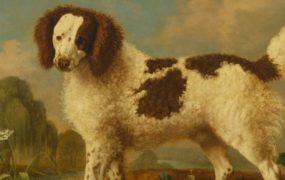 As raças de cães mais desconhecidas do mundo