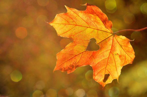 outono-dia-da-felicidade
