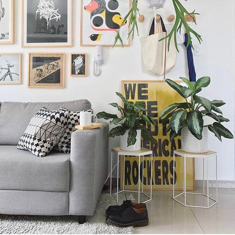 plantas-decoracao
