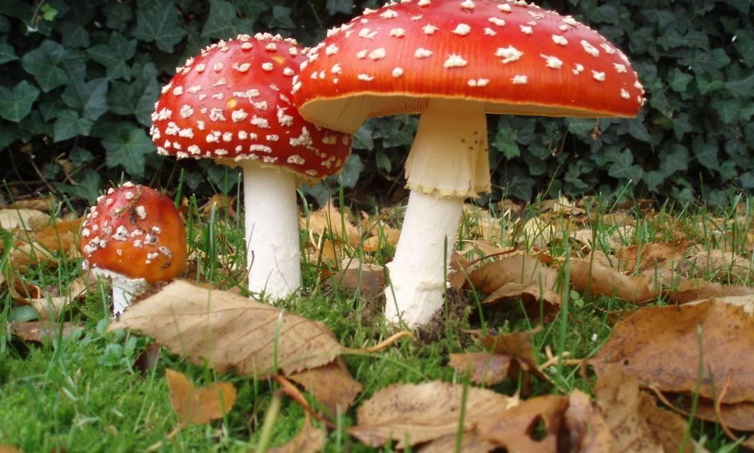 cogumelo-super-mario